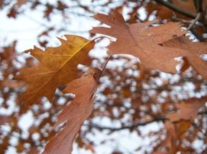 autumn-0062